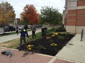 CHEC Beautification Day